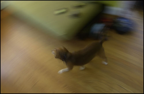 Frankie in Movement